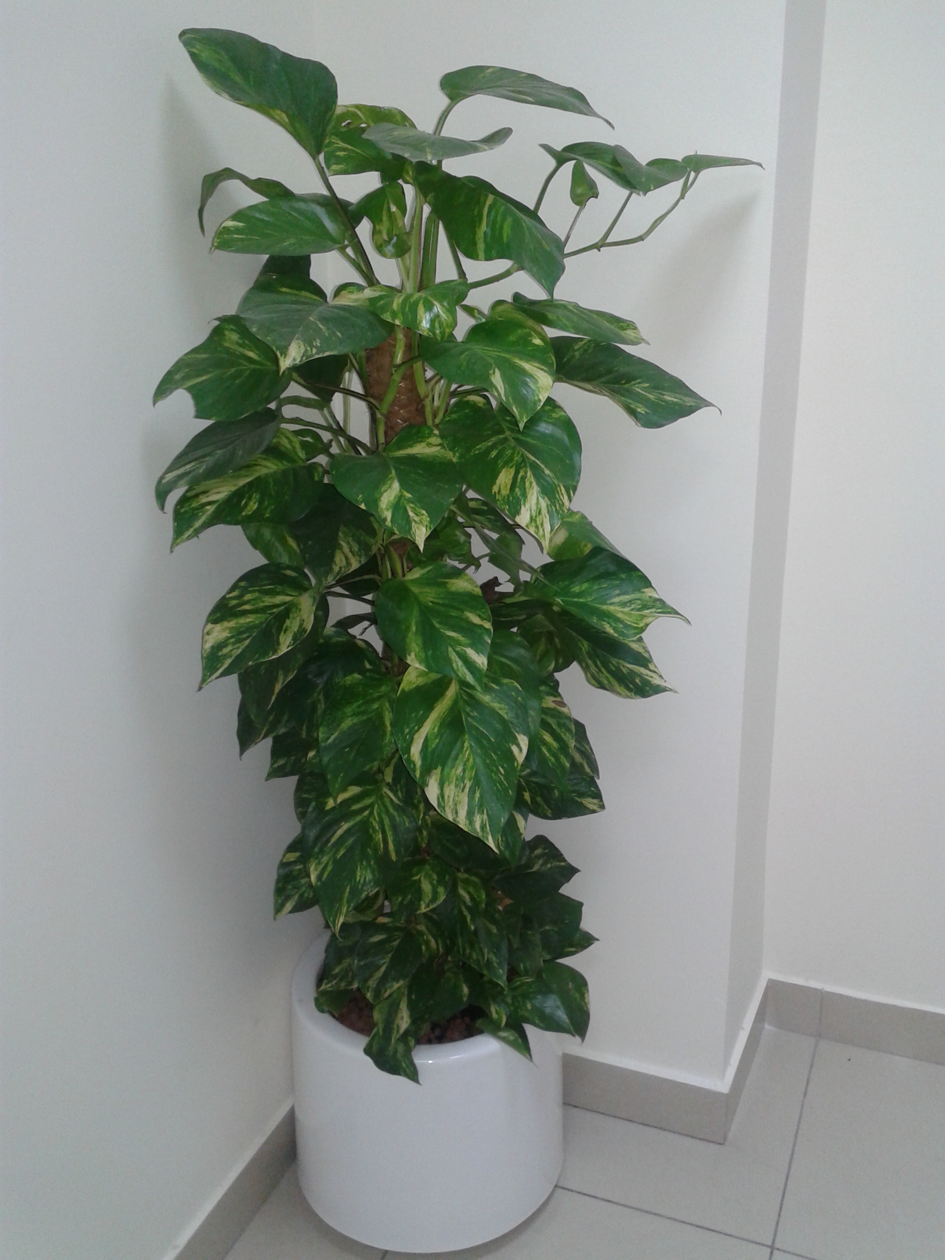 landscaping company dubai | indoor plants u.a.e | outdoor plants Artificial Office Plants